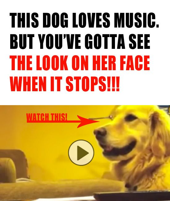 Ever seen a head-bopping dog? Neither had I!