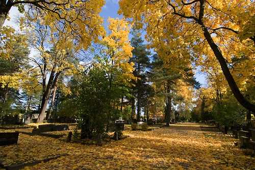 A park in Lahti