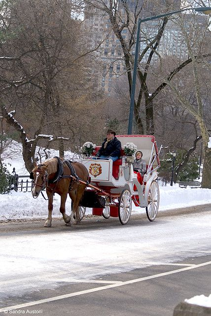 Horse carriage ride in Central Park, New York City