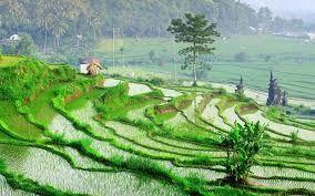 Les rizières en terrasse près d′Abang Karangasem Bali #voyage_bali #bali_rizieres #rizieres_en_terrasse
