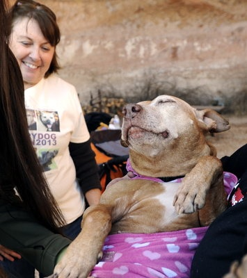 Little Red, a rescued pit bull, smiles as her adopter, Susan, looks on during a reunion Monday at Best Friends Animal Society in Kanab.