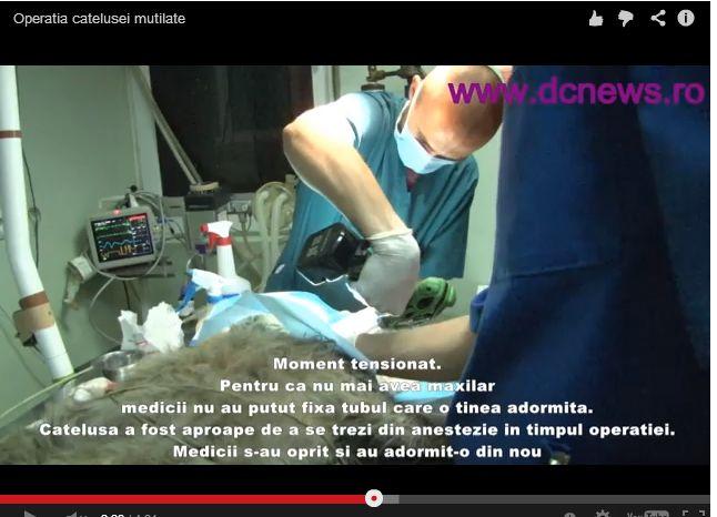 Four Paws Saves Mutilated Romanian Dog. Huffington Post