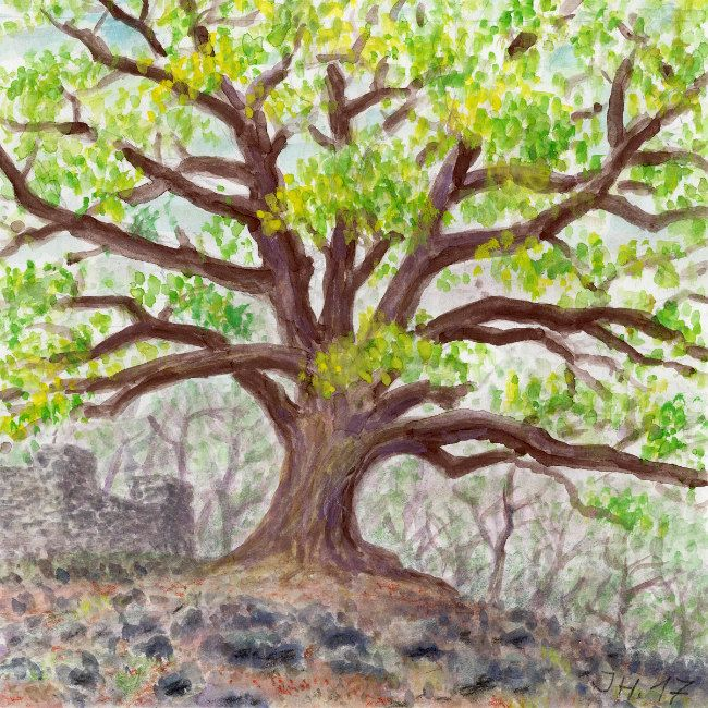 Old oak (Quercus ilex)  on Etna. Watercolor and pastel by Jana Haasová