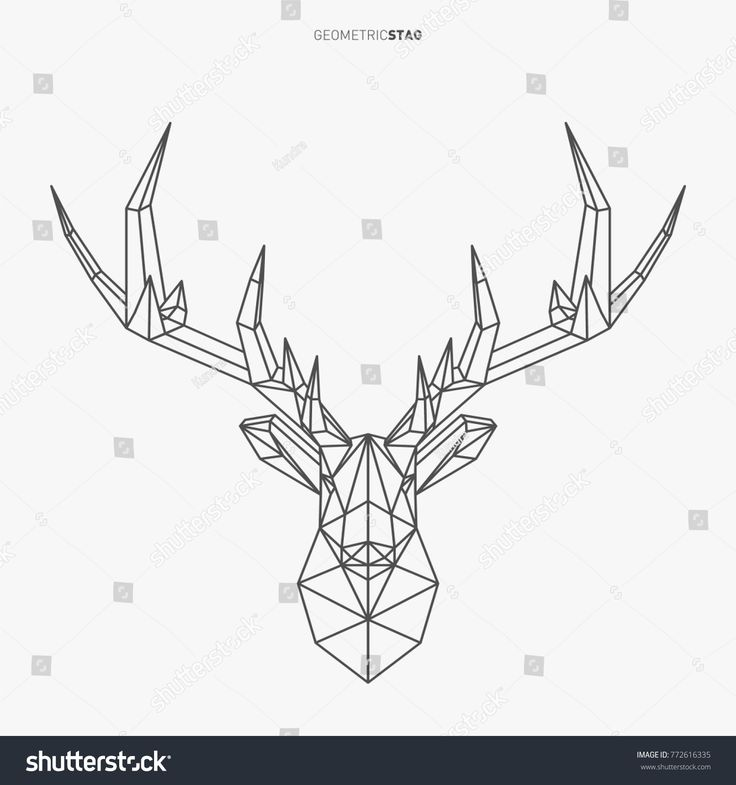 Vector geometric deer line- art. Low poly style animal drawing. Stag head and an… – Oliver Taylor