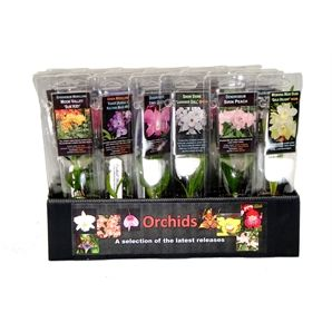 50mm Orchid Poly Pack