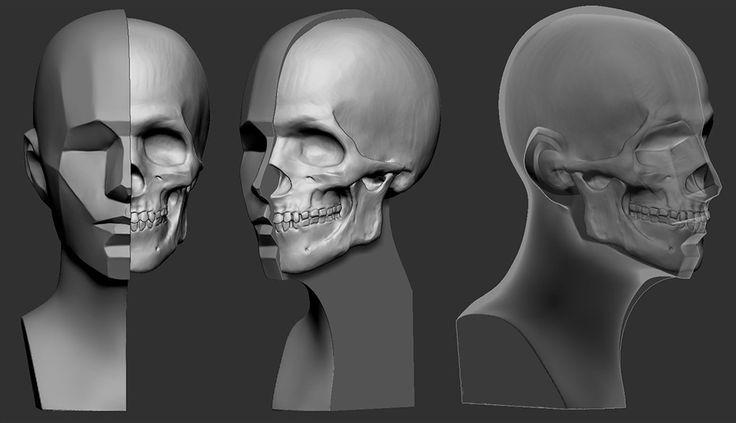 Anatomy study Asaro head : https://www.youtube.com/watch?v=kcOVUq6jISU Skull : https://www.youtube.com/watch?v=KxJ0Tu_RjTg