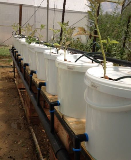 1000 ideas about aquaponics on pinterest aquaponics for How to grow hydro in a fish tank
