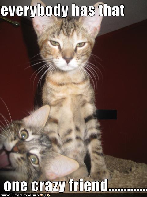 Hee hee. Kitty photo bomb