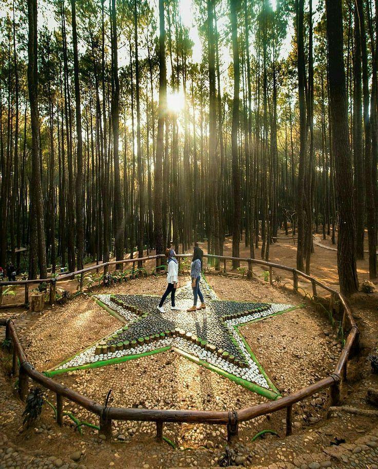 Location Hutan Pinus Imogiri, Bantul, Yogyakarta