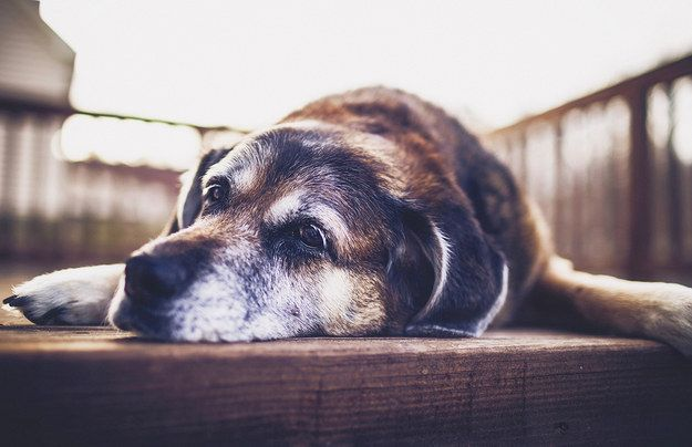 """""""…and my spot on the porch."""" 