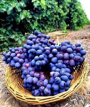 Bálint György kertről, növényekről | Tavaszi munkák a szőlőskertben