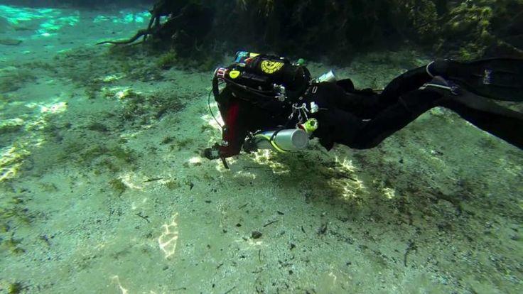 Ginnie Springs - Mergulho em Caverna - Mergulho No Japão - Coral Diving