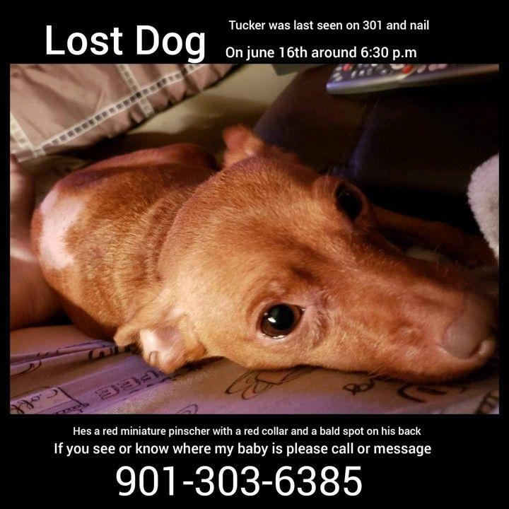 Pin By Barbara J Monaco On Dogs Found Pls Microchip Losing A