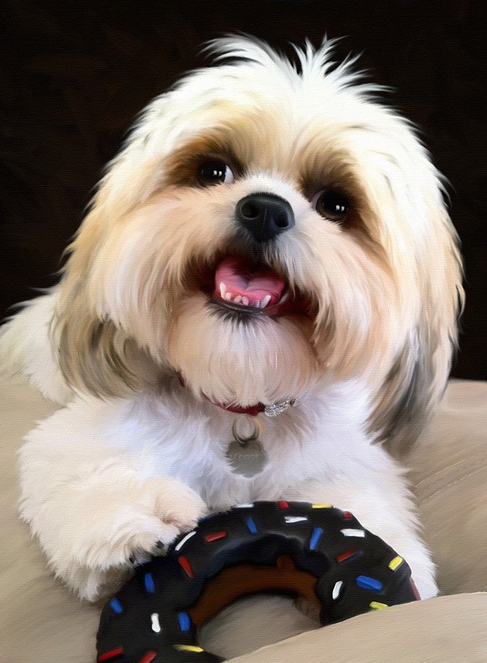 lhasa apso haircuts shih tzu with a donut dogs donuts and 1562
