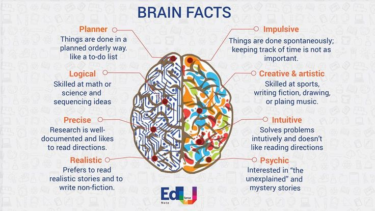 BRAIN FACTS    The human brain is the most complex organ in the human body and probably the most complex creation present on this universe. #EdusenseNote