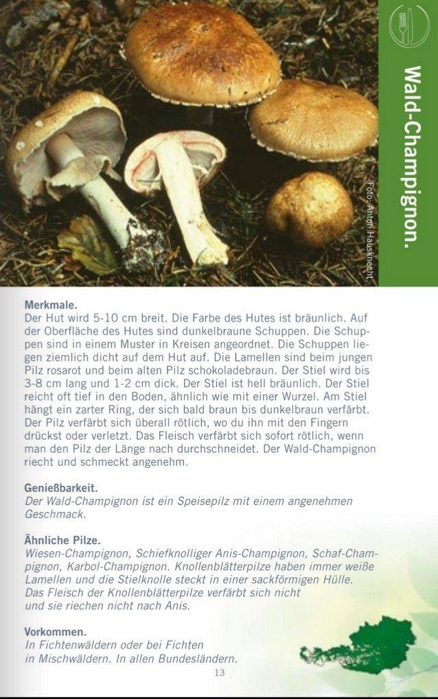 Wald Champignon Pilze Champignons Braun Werden