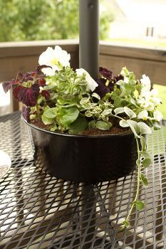 bundt cake planter, flowers, gardening, repurposing upcycling, Once the pan was dry I added potting mix and an assortment of flowers that included the vinca vine white begonias white petunias and coleus