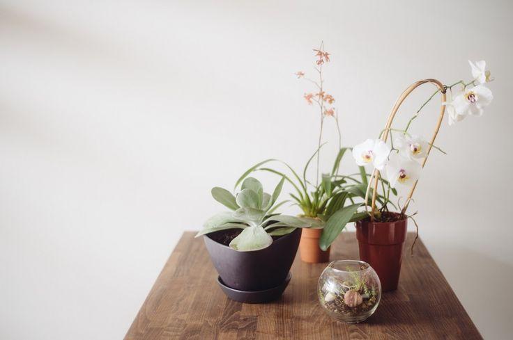 Nature's Path  7 Indoor Gardening Tips For Winter