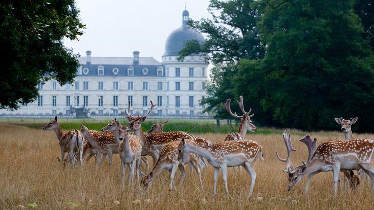 VALENCAY- Le parc aux daims existait déjà à l'époque de Talleyrand qui acquit le domaine en 1803 à la demande de Napoléon.