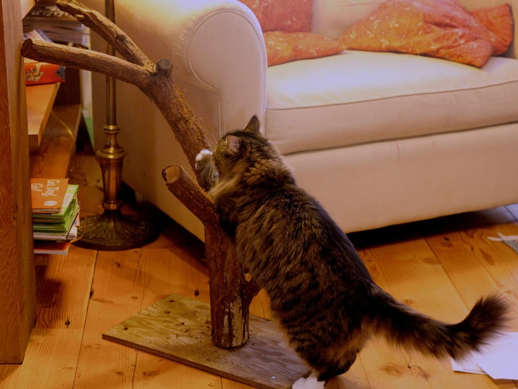 Save your furniture, and give your cat what she really wants. Coming soon: Trash Hacker! Great home hacks to help you re-think your stuff, like this real-tree cat-scratch tree. Branch + particle board = cat scratch tree.