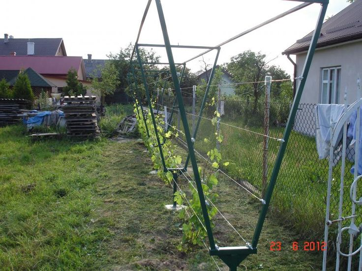 Стойки под виноград своими руками видео