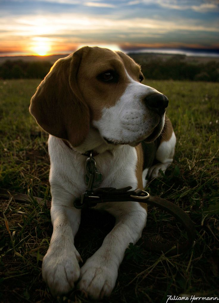 The end of a very Beagle-y Day!