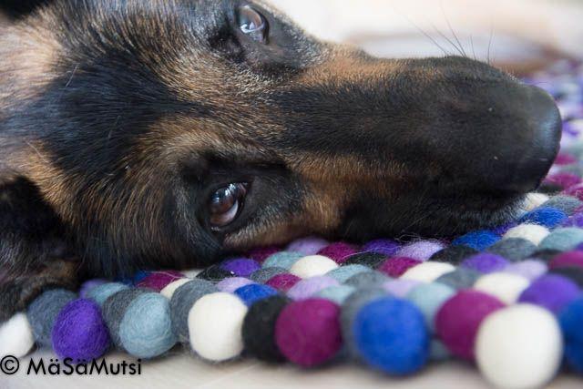 Sukhin pehmeä Manna-huopapallomatto kelpasi erinomaisesti Mutsi on Mäsä-bloggaajan Sissi-saksanpaimenkoiran pediksi - jopa niin paljon, että talouteen harkitaan nyt toista huopapallomattoa ihan vain koiria varten. #Sukhi #feltballrug #huopapallomatto #fordogs