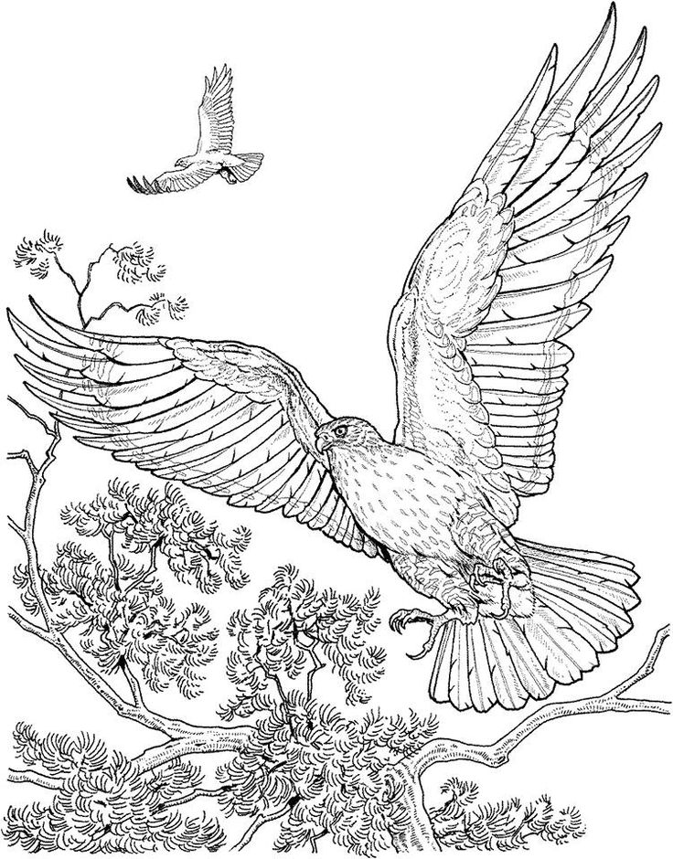 17 Best images about Coloriage d 39 oiseaux on Pinterest