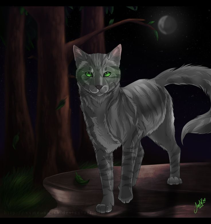 286 Best Warrior Cats :) Images On Pinterest