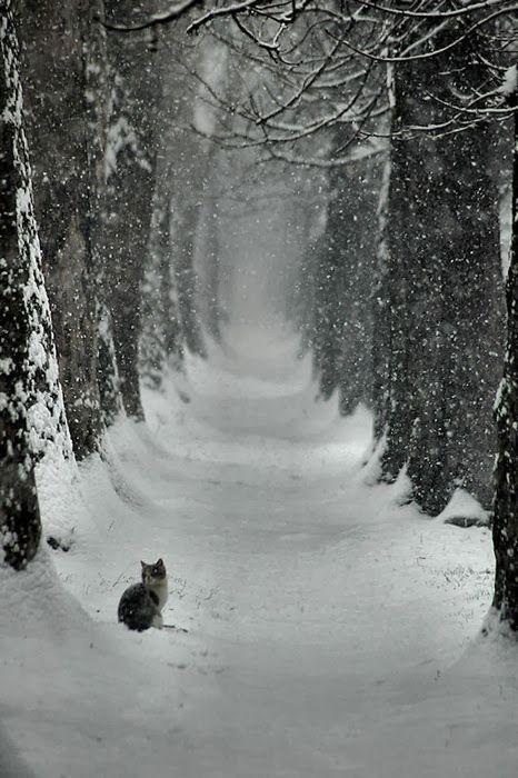 Snowy path, alone cat