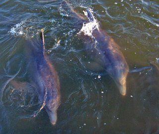 Dolphin Cruises, Sailboats, Charter Boats in Gulf Shores-Orange Beach
