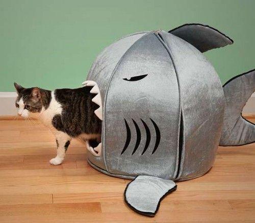 notizie animali, notizie divertenti, notizie strane, notizie commoventi, cani di piccola tahlia, gatti, cucce per cani, cucce per gatti, cuccia a forma di squalo