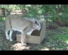 Kutu seven kediler www.hayvanizle.com farkı ile sizlerle :)