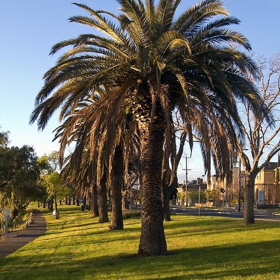 Western Beach, Geelong