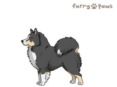 Furry Paws // UCH Kip's Kiel [3STM 23HH 1.587] 14.5 *BoB*x2's Kennel