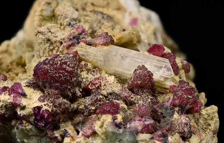 Hambergite, Be2BO3(OH), Tourmaline (Var: Rubellite), Palelni mine, Khetchel village, Molo quarter, Momeik Township, Kyaukme District, Shan State, Myanmar.  Crystal size: 28 mm. Hambergite nested in group of mushroom rubellites. Copyright: © Harald Schillhammer