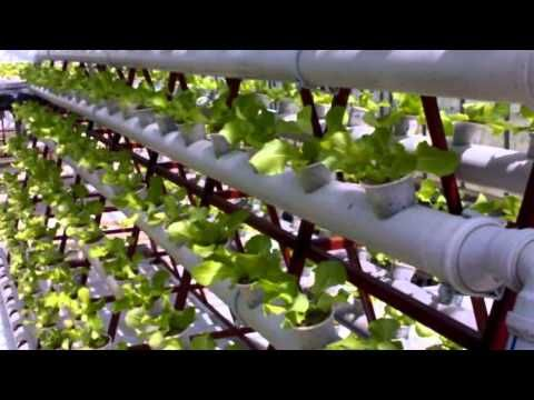Build A Nft Hydroponic System Youtube Cultivos