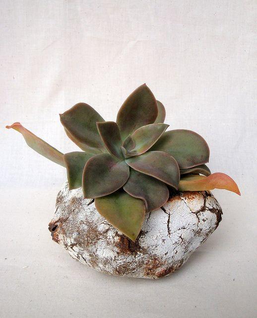 crusty cactus pot