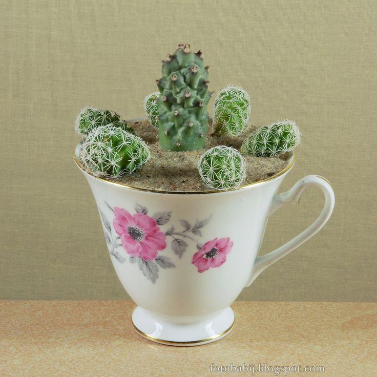 Darmowe zdjęcia na tapety, e-kartki, życzenia... Free Photos : Kaktusy w starej filiżance