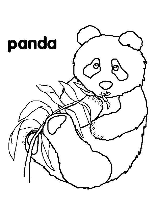 Panda Bear Eating Bamboo 17 Coloring