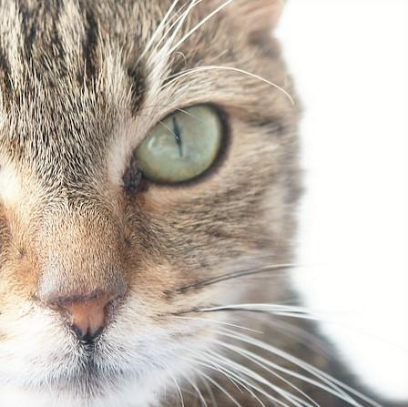 Exercício para gatos obesos - PeritoAnimal