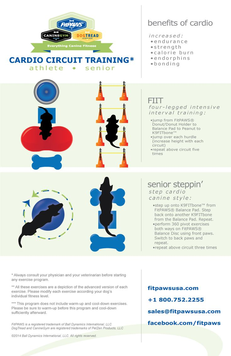 Like humans, the benefits of cardio circuit training are huge to dogs of all ages and abilities. Let this infographic inspire your imagination!