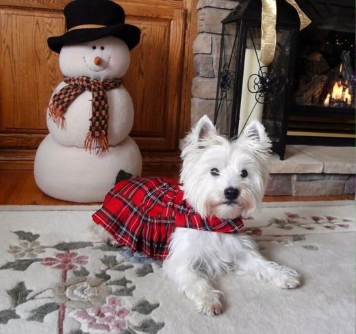 Frosty The Snowman & Mr. Beezlee Pelham, ON