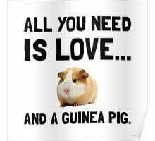 All you need is love and a guinea pig!