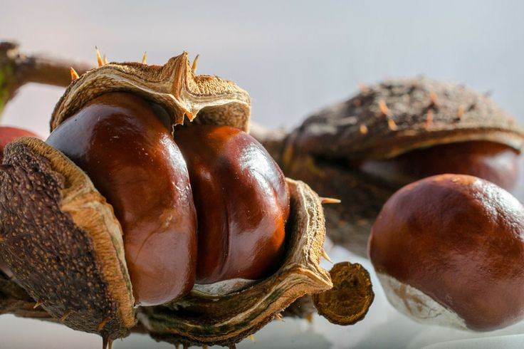 A kosárba gyűjtött barna termések kincset érhetnek! Az alábbi videó két pofonegyszerű módszert mutat be arra, hogy miként lehet a vadgesztenyéből mosószert készíteni.