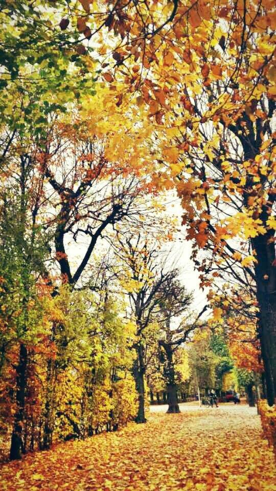 Autumn in Wiena, Austria