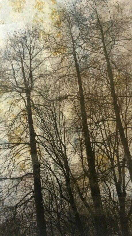 Manuel Felisi Oil on canvas