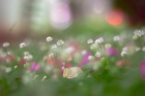 detail; flower; bokeh; photo; photography