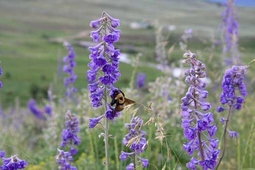 Bee Faithful? | Ecology Global NetworkEcology Global Network
