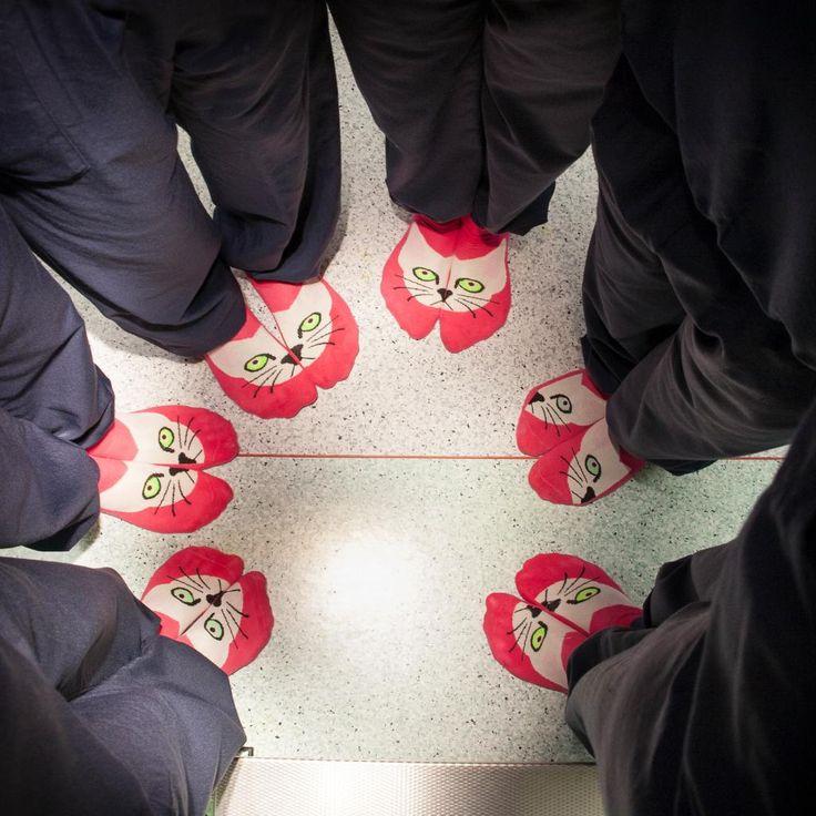 Gespot op onze OK! Operatie-assistente #kaakchirurgie droeg onlangs deze 'poezenvoeten' en inspireerde het hele kaakteam op 21 juli 2014. De beste zorg bepalen we samen.